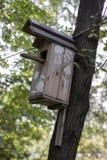 Pajarera en un árbol de pino Imagen de archivo