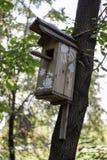 Pajarera en un árbol de pino Fotografía de archivo libre de regalías