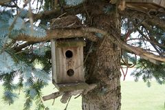 Pajarera en un árbol de pino Imagen de archivo libre de regalías