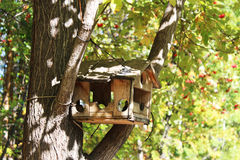 Pajarera en un árbol en un bosque Foto de archivo libre de regalías