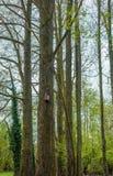 Pajarera en un bosque Imagenes de archivo