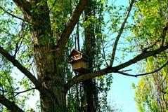 Pajarera hermosa en un parque de Moscú en primavera Foto de archivo