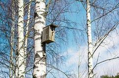 Pajarera vieja en un árbol de abedul Imágenes de archivo libres de regalías