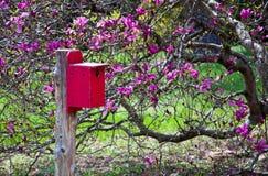 Pajarera y magnolia Fotografía de archivo libre de regalías