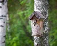 Pajarera y pájaro minúsculo Foto de archivo