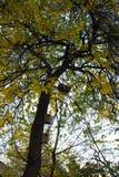 Pajareras de madera en un árbol Foto de archivo