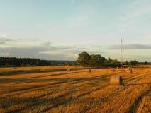 Pajares en el campo del verano Heno cosechado en un campo hermoso del verano Detalles y primer foto de archivo libre de regalías
