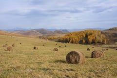 Pajares en el otoño de las montañas imágenes de archivo libres de regalías