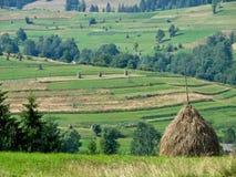 Pajares en los pastos de la montaña de los Cárpatos foto de archivo libre de regalías