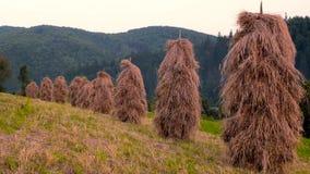Pajares tradicionales en un pueblo de monta?a, pajar en campo de hierba hayfield pajares en un pequeño campo cerca del almacen de video