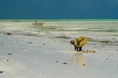 PAJE, ZANZIBAR - DECEMBER 17 2007: Afrikaanse vrouw in traditionele gele kleren die krabben en overzeese shells zoeken in wit zan royalty-vrije stock foto