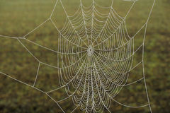 pająk zamarznięta sieć Zdjęcie Stock