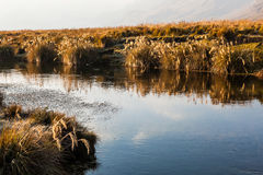 Pajonales gold. With blue river at dawn Stock Images