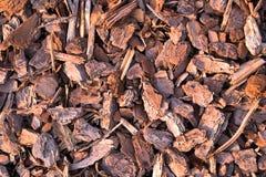 Pajote de la corteza del pino Foto de archivo libre de regalías
