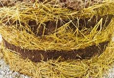 Pajote orgánico rico Foto de archivo libre de regalías