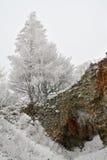 pajstun zima Zdjęcie Royalty Free