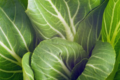 Pak Choi. Close up of pak choi (bok choy Stock Photo