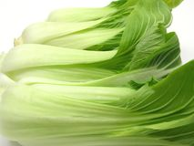 Pak choi. Arranged on a white background Stock Photos