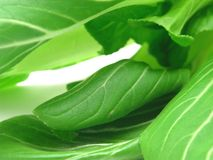 Pak choi as a background picture Royalty Free Stock Photography
