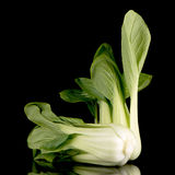 Pak choi on black Royalty Free Stock Image