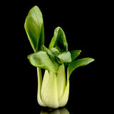 Pak choi on black Stock Image