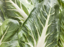 Pak Choi, Bok Choy, Chinese Cabbage Royalty Free Stock Images