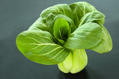 Pak Choi or Bok Choy Royalty Free Stock Images