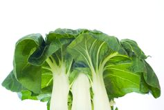 Pak choi, chinese cabbage Royalty Free Stock Photo