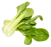 Pak Choi Chinese Cabbages Arkivfoto