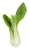 Pak Choi Royalty Free Stock Photo