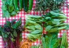 Pak choi and more. Check cable cloth as background for beautiful vegetables royalty free stock image