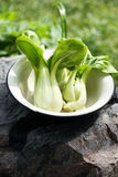 Pak Choi Oriental vegetable Stock Photo