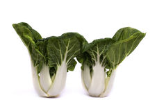 Pak choi. On white background Royalty Free Stock Photography