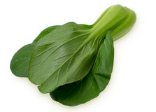 Pak choi in a white background Royalty Free Stock Image