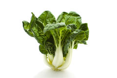 Pak choy. Green Pak choy on white background Royalty Free Stock Photo