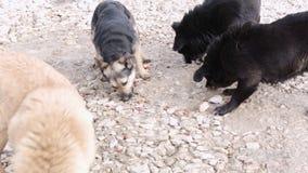 Pak Hongerige Honden stock footage