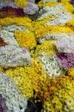 Pak Khlong Talat flower market Royalty Free Stock Images