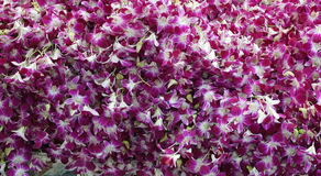 Pak Khlong Talat flower market Stock Image