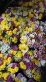 Pak Khlong Talat flower market Stock Images