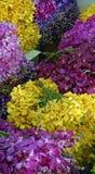 Pak Khlong Talat flower market Stock Photo