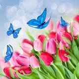 Pak roze tulpen met vlinders Stock Fotografie