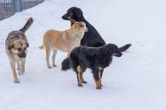 Pak verdwaalde grote honden op een straat stock foto's