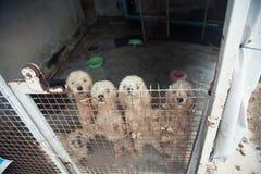 Pak verdwaalde honden Stock Foto's