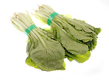 Pakchoi Stock Photo