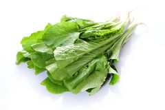 Pakchoi Stock Photography