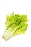 Pakchoi cabbage Stock Image
