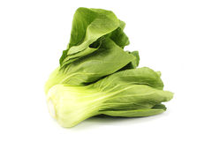 Pakchoi cabbage Royalty Free Stock Photography