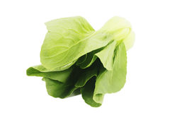 Pakchoi cabbage Stock Photography