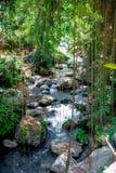 Pakerisan Riverlandscape in de tempel van Gunung Kawi Stock Foto