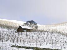 Paket der Rebbe-Landschaft-Schweiz Aargau Thalheim lizenzfreie stockbilder